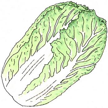 10.29*白菜*198.5.jpg