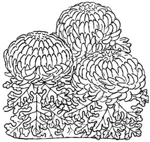 10.8*菊の華ラフ*100.jpg