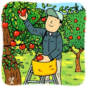 11.30*りんごの収穫*130-375.jpg