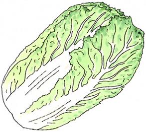 17.11.26*白菜*95-228.jpg