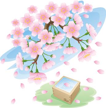 2018.4.4*桜と升酒*42-400.jpg
