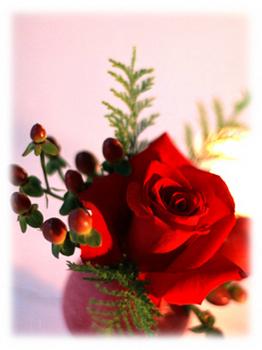 3.24*赤いバラ*65-356.jpg