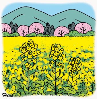 3.25*菜の花と桜*122-342.jpg