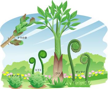 4.18*春の山菜*37-360.jpg