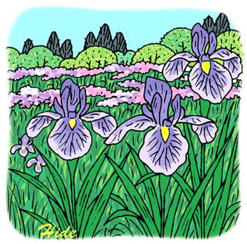 4.21*花菖蒲の花イラスト*125-361.jpg