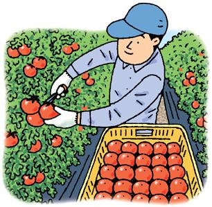 5.21*トマトが美味しい*112-268.jpg