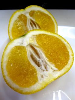 6.11*幻のオレンジ*29.4-240.jpg