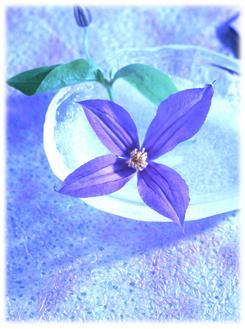6.25*美しい花*59.2-236.jpg