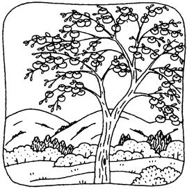 9.14*柿モノクロ*95-71.jpg