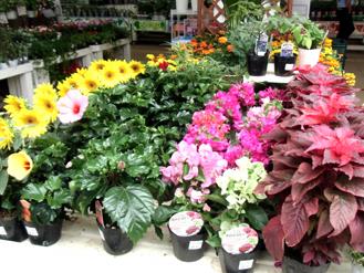 シマホにて花、はな*7.45-238.jpg