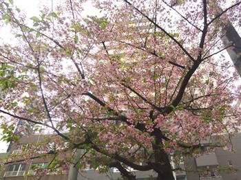 桜が咲く*34.2-343.jpg