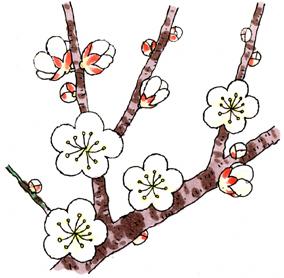 梅の花*95.jpg