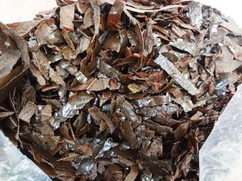 残されたビワの葉*30-342.5.jpg