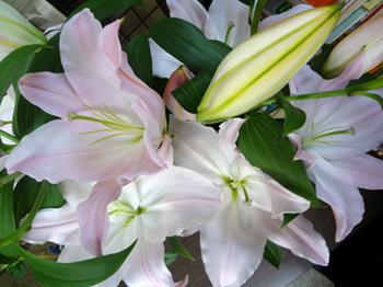百合の花*26.7-272.jpg