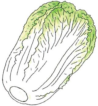 10.16*白菜イラスト*203.9.jpg