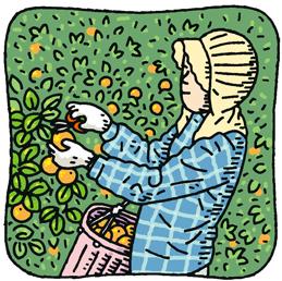 10.27*みかんの収穫*90-195.8.jpg