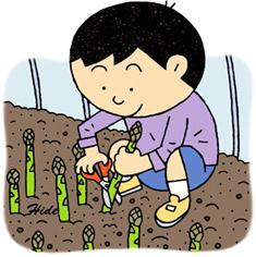 19.5.25*アスパラの収穫*86-162.5.jpg