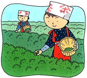 2.10*茶摘み*100-248.2.jpg