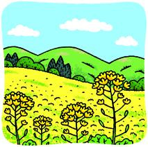 2.28*菜の花*76-176.4.jpg