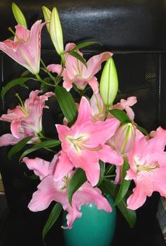 2012.6.17*ユリの花*19.jpg
