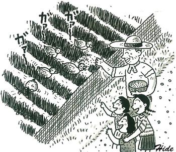 2017.9.10*アイガモ農法イラスト.jpg