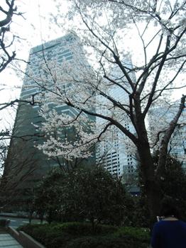 2018.3.27*桜と高層ビル*6.6-391.9.jpg