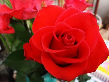 2019.6.25*真っ赤な薔薇*66-284.jpg