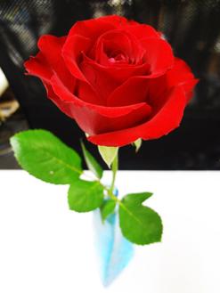 2019.9.11*真っ赤な薔薇*72-238.1.jpg