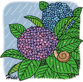 6.1*紫陽花*58.5-224.8.jpg