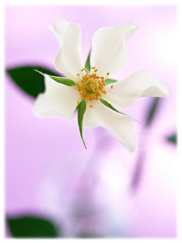 6.21*美しい花*40.5-284.8.jpg