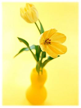 6.21*黄色い花*42.2-284.0.jpg