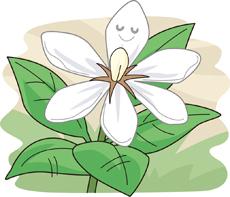 8.22*クチナシの花*56-132.7.jpg