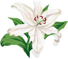 9.1*百合の花*72-137.3.jpg