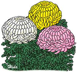 9.18*菊の花*58-175.7.jpg