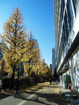 いちょう銀杏並木です?5.8-302.2.jpg