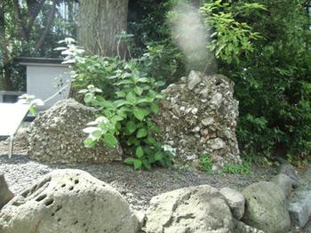 日枝神社・さざれ石*6.0-324.0.jpg